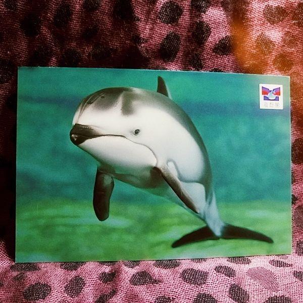 japan dolphin